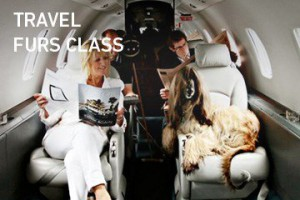 travelfursclass